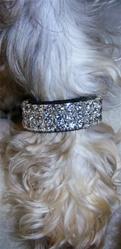 Rhinestone Dog Bracelet Set