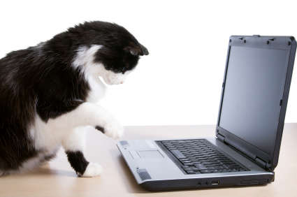 Online Search for pet health issues