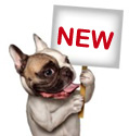 NEW pet collars at Dog Collar Fancy