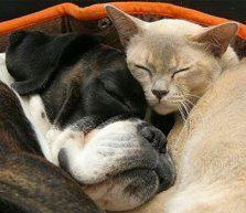 Pet News from Dog Collar Fancy
