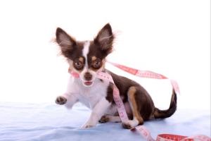 Dog Collar Shop by Width